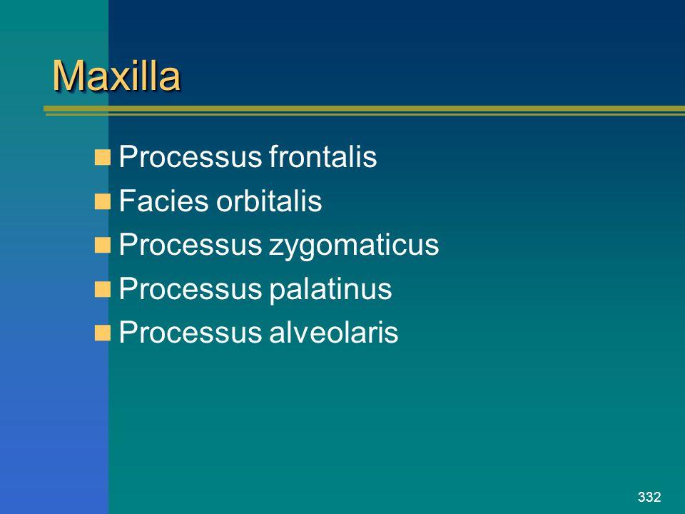 Maxilla Processus frontalis Facies orbitalis Processus zygomaticus