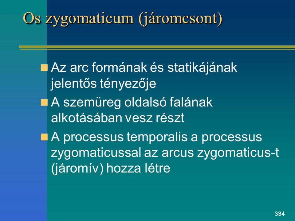 Os zygomaticum (járomcsont)