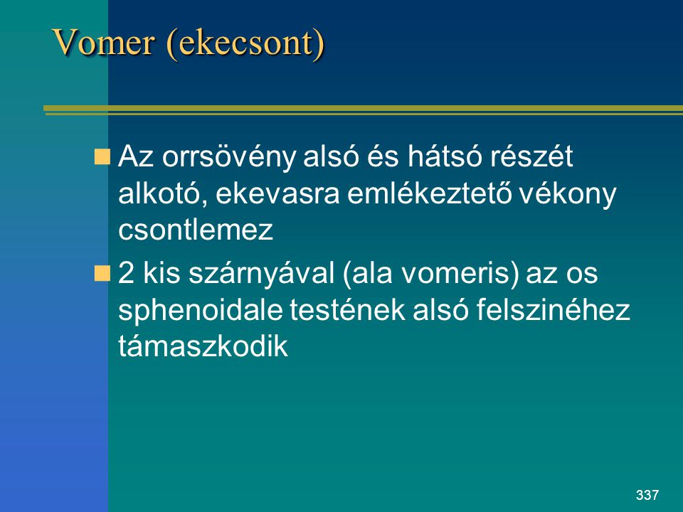 Vomer (ekecsont) Az orrsövény alsó és hátsó részét alkotó, ekevasra emlékeztető vékony csontlemez.