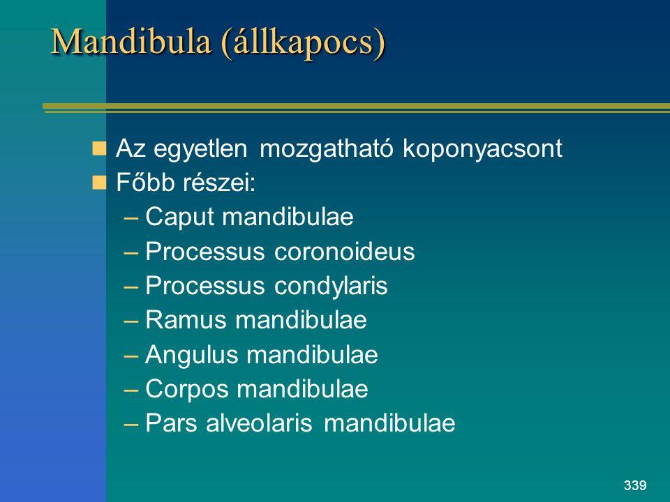 Mandibula (állkapocs)