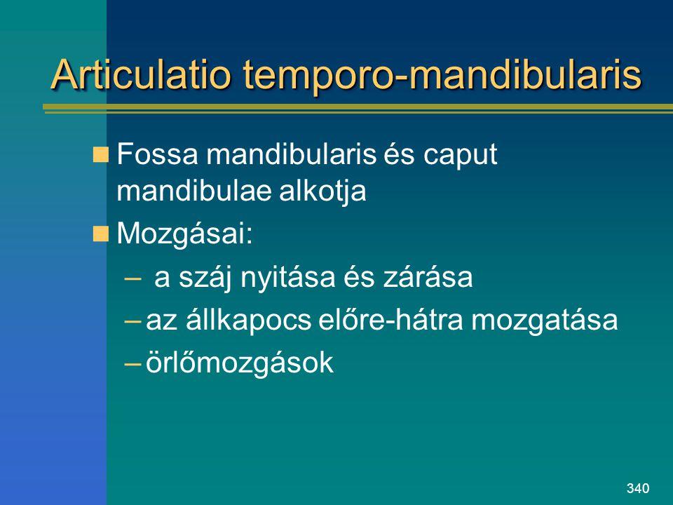 Articulatio temporo-mandibularis