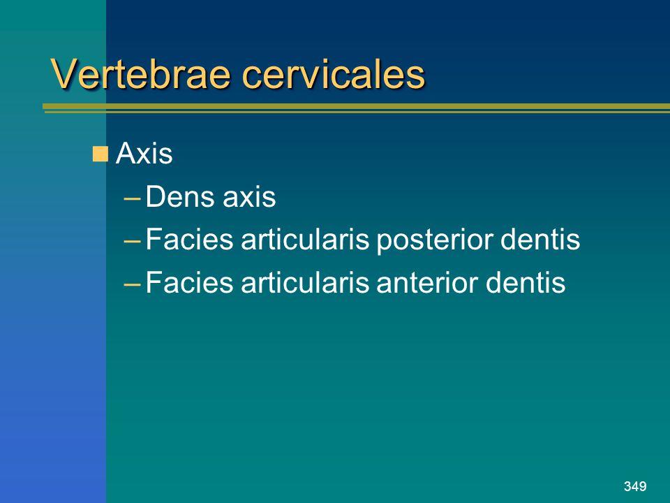 Vertebrae cervicales Axis Dens axis
