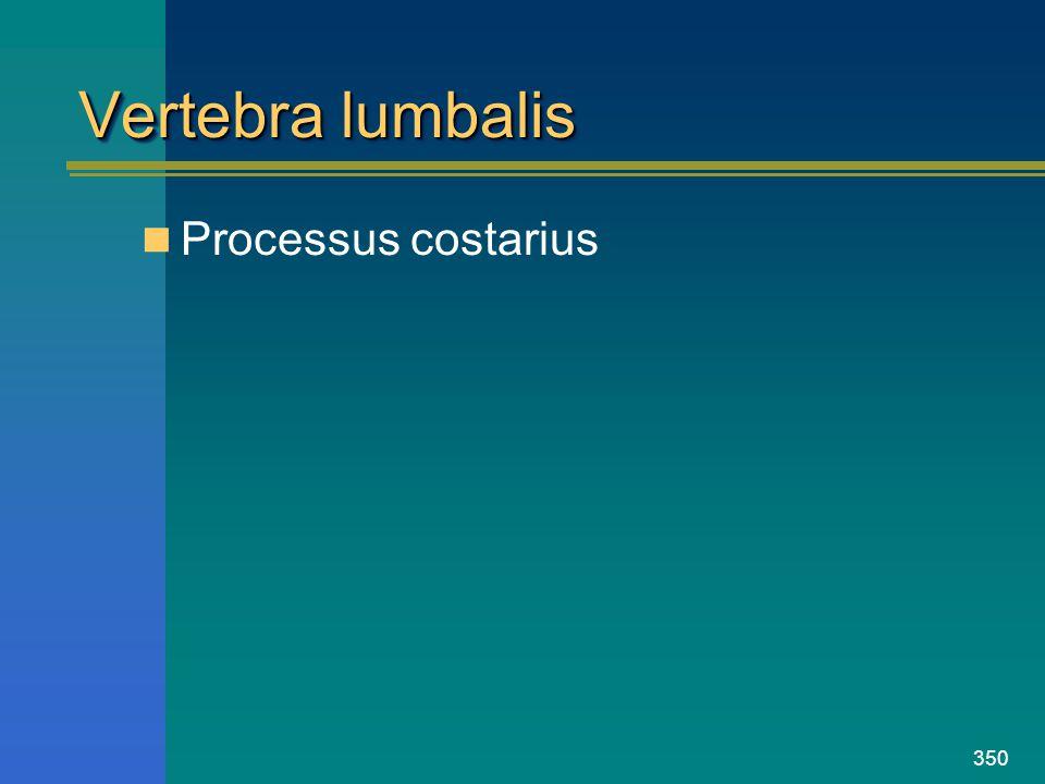 Vertebra lumbalis Processus costarius
