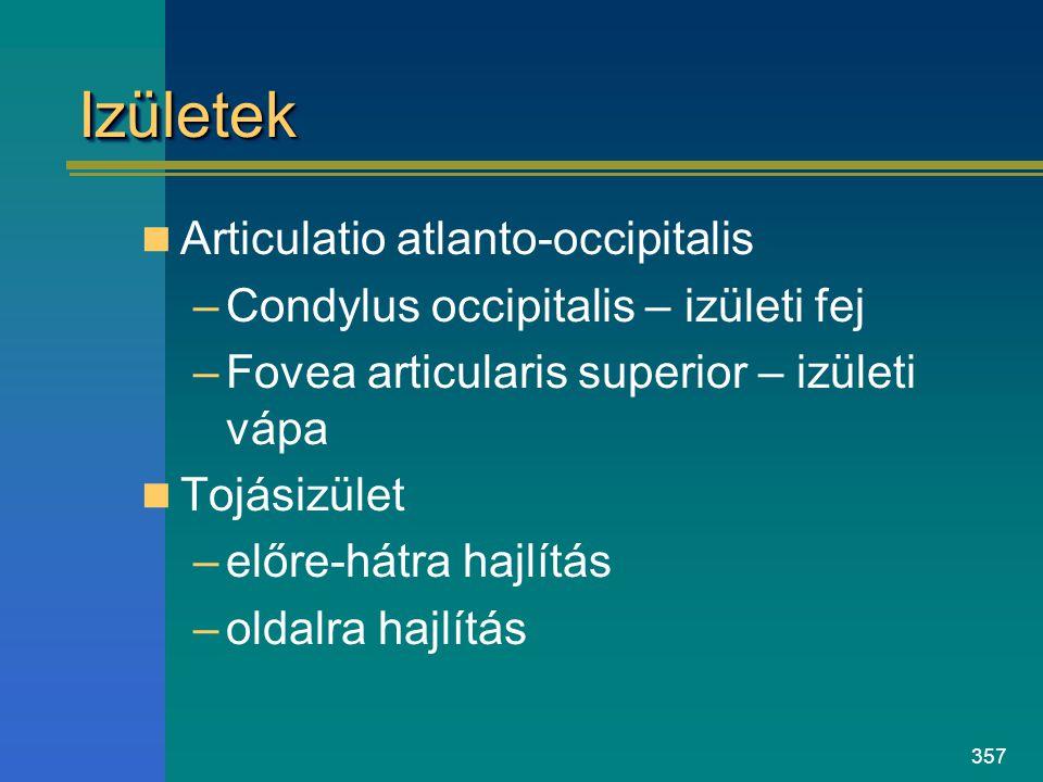 Izületek Articulatio atlanto-occipitalis