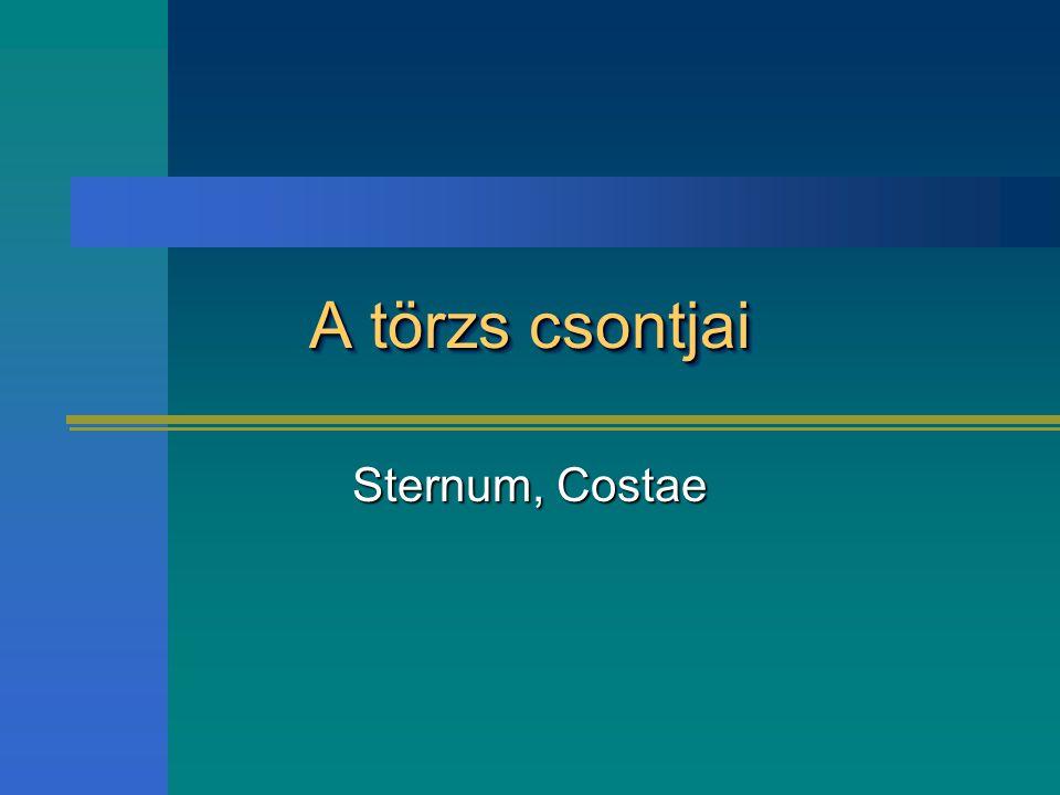 A törzs csontjai Sternum, Costae