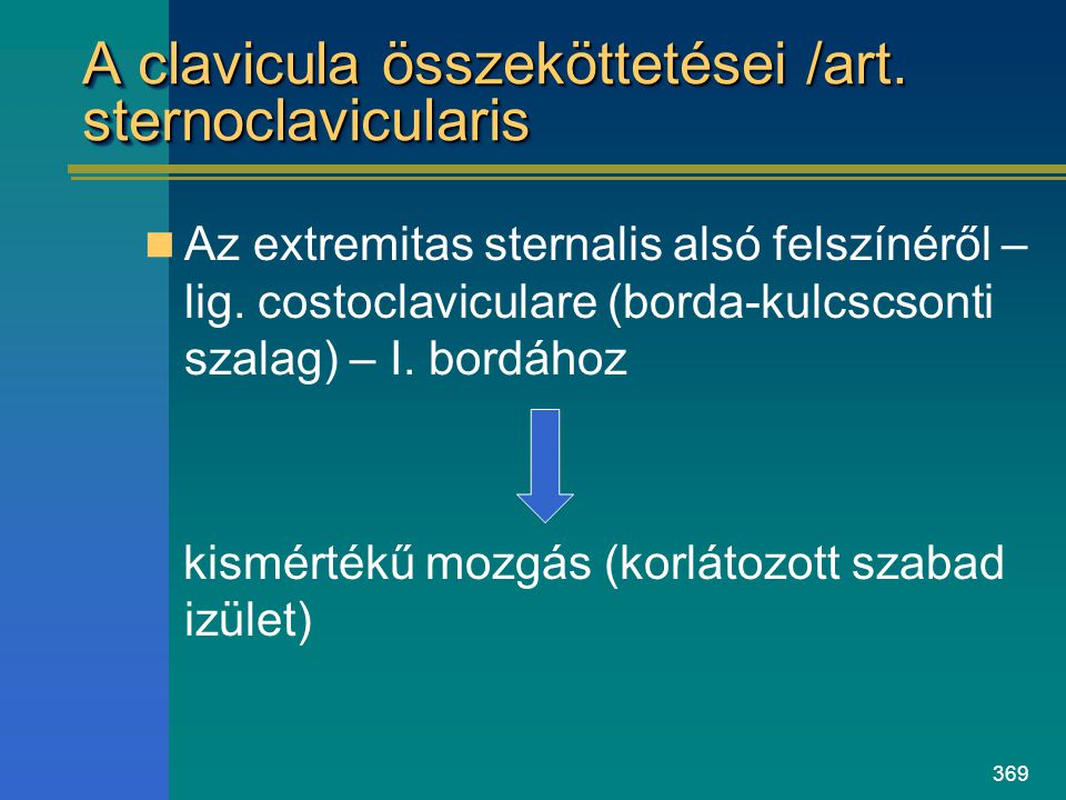 A clavicula összeköttetései /art. sternoclavicularis