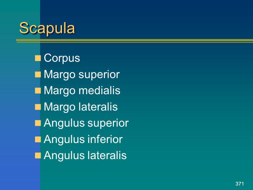 Scapula Corpus Margo superior Margo medialis Margo lateralis