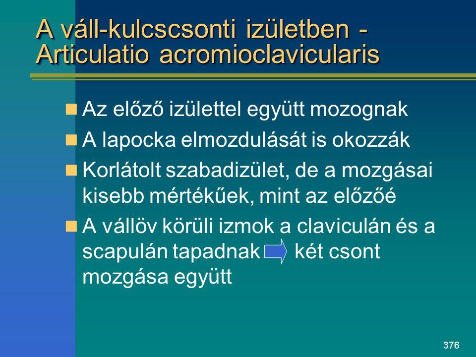 A váll-kulcscsonti izületben - Articulatio acromioclavicularis