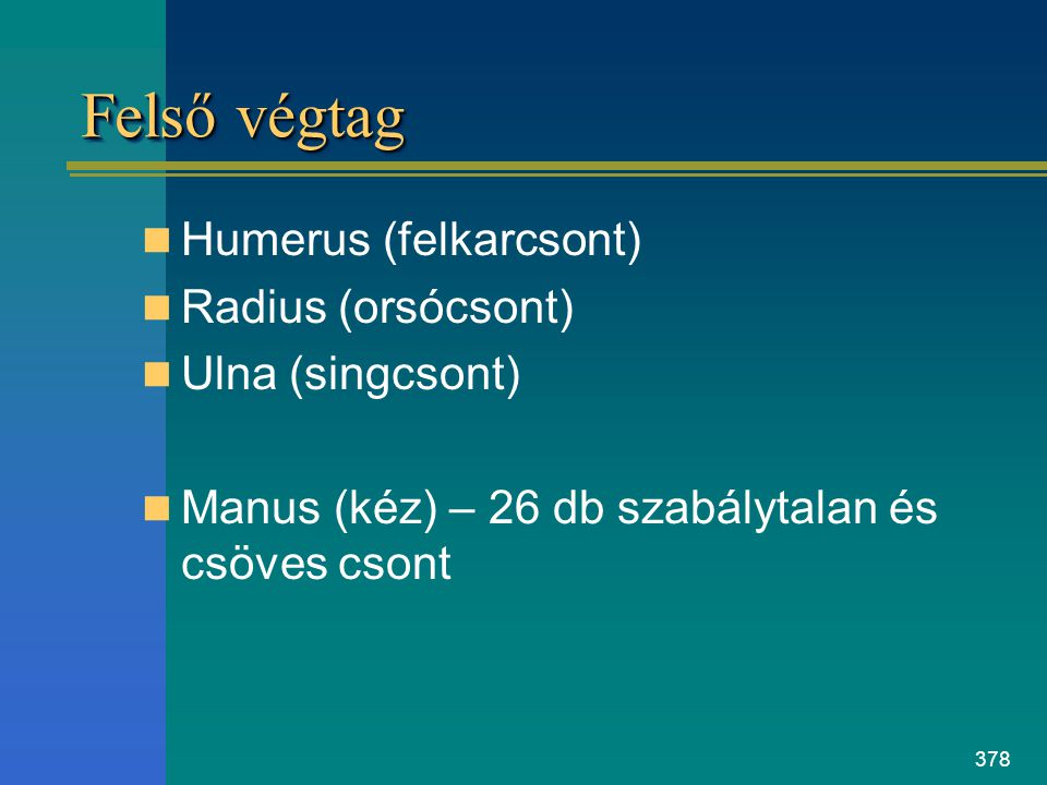 Felső végtag Humerus (felkarcsont) Radius (orsócsont) Ulna (singcsont)