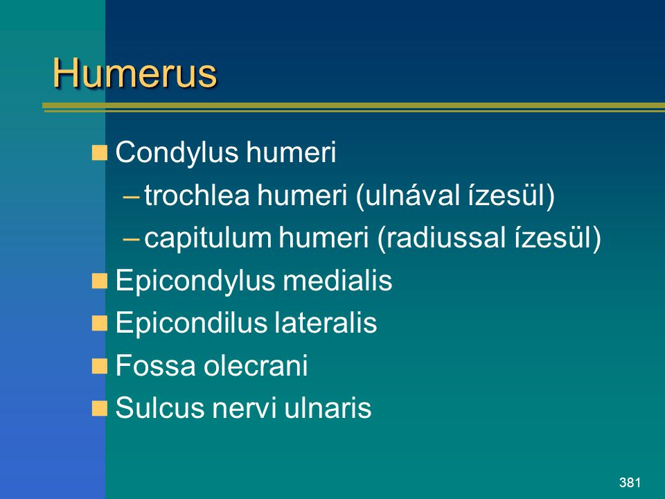 Humerus Condylus humeri trochlea humeri (ulnával ízesül)