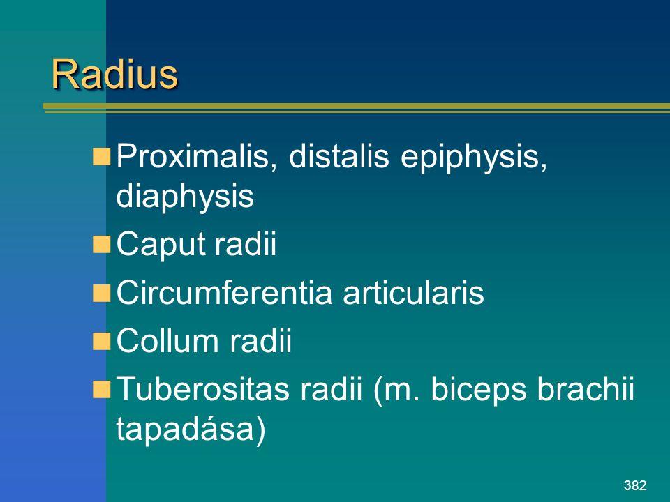 Radius Proximalis, distalis epiphysis, diaphysis Caput radii