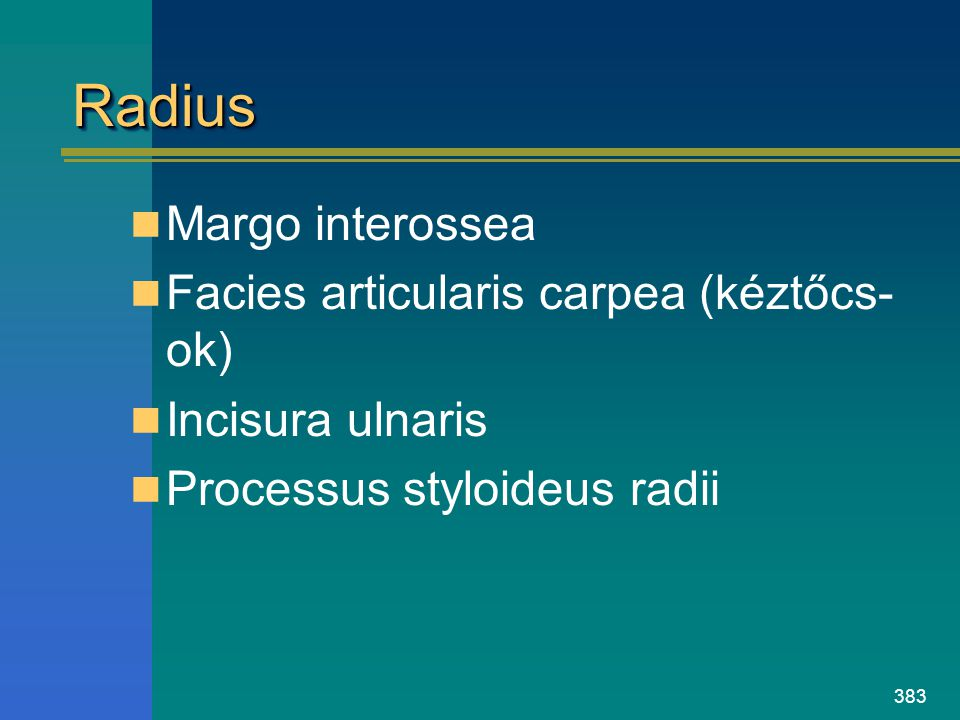 Radius Margo interossea Facies articularis carpea (kéztőcs-ok)