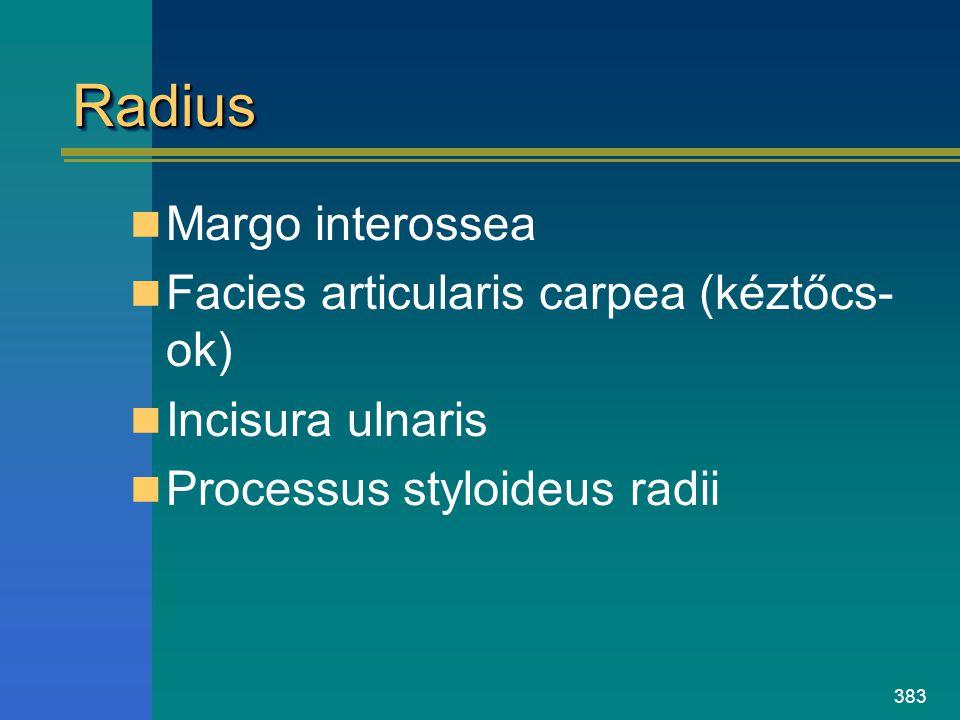 Radius Margo interossea Facies articularis carpea (kéztőcs-ok)
