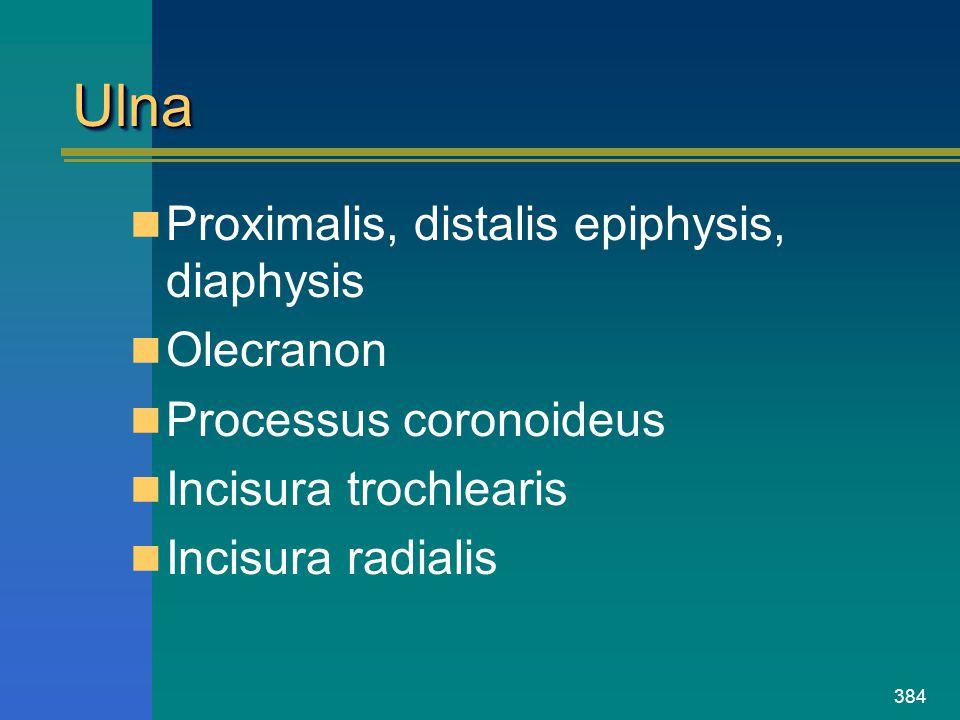 Ulna Proximalis, distalis epiphysis, diaphysis Olecranon