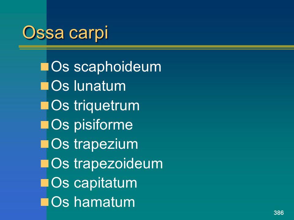 Ossa carpi Os scaphoideum Os lunatum Os triquetrum Os pisiforme