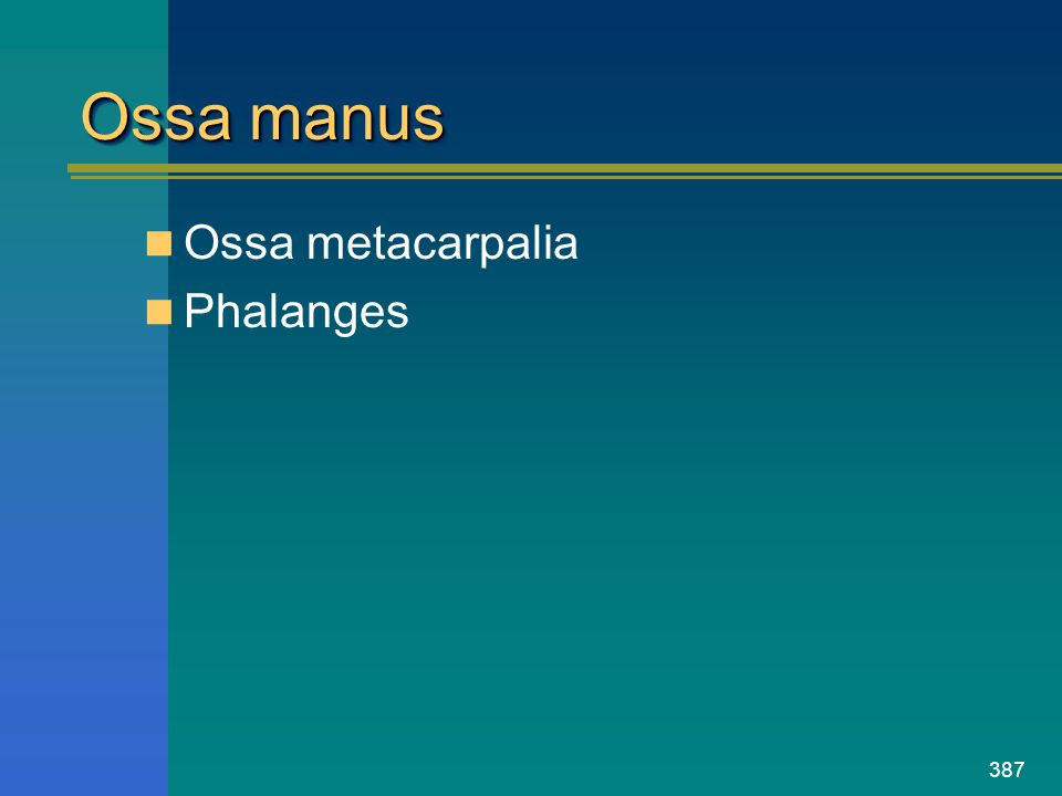 Ossa manus Ossa metacarpalia Phalanges