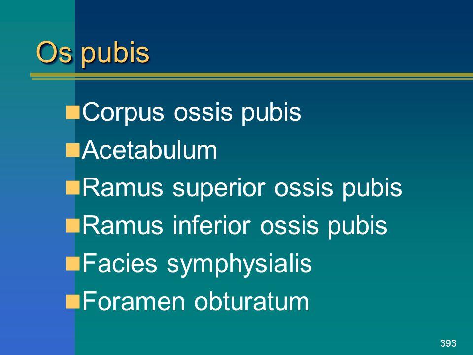 Os pubis Corpus ossis pubis Acetabulum Ramus superior ossis pubis