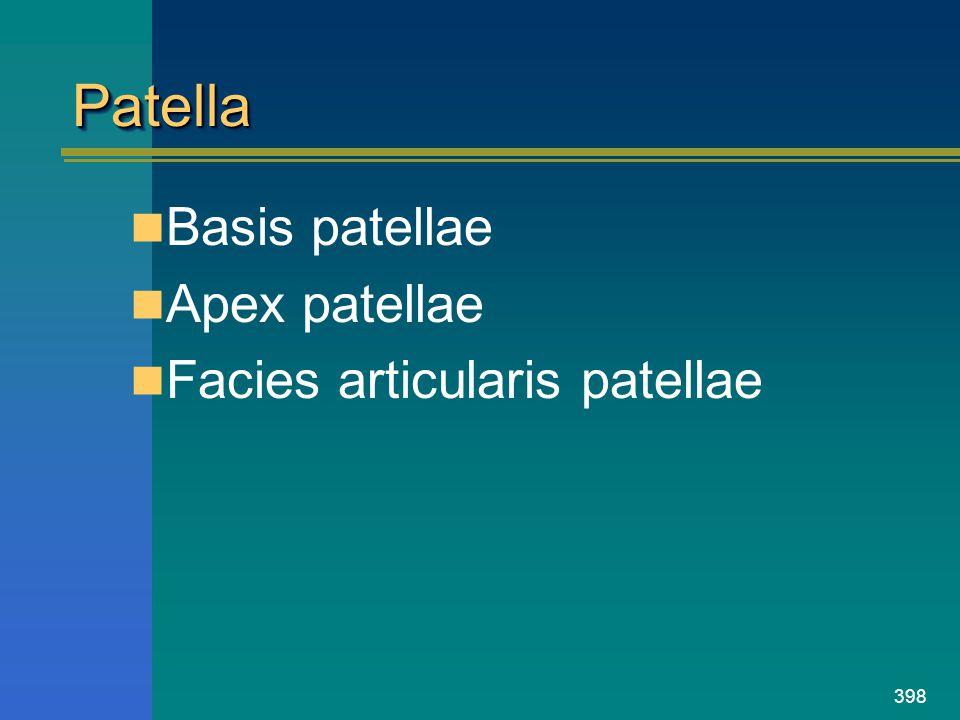 Patella Basis patellae Apex patellae Facies articularis patellae