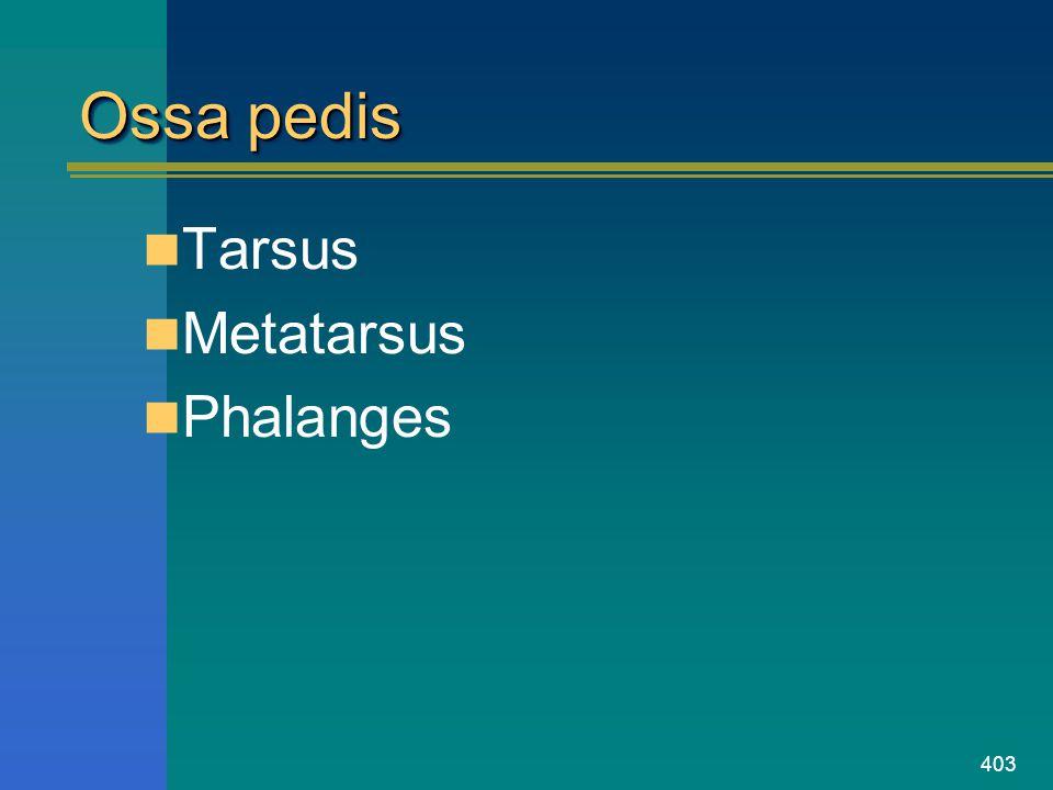 Ossa pedis Tarsus Metatarsus Phalanges
