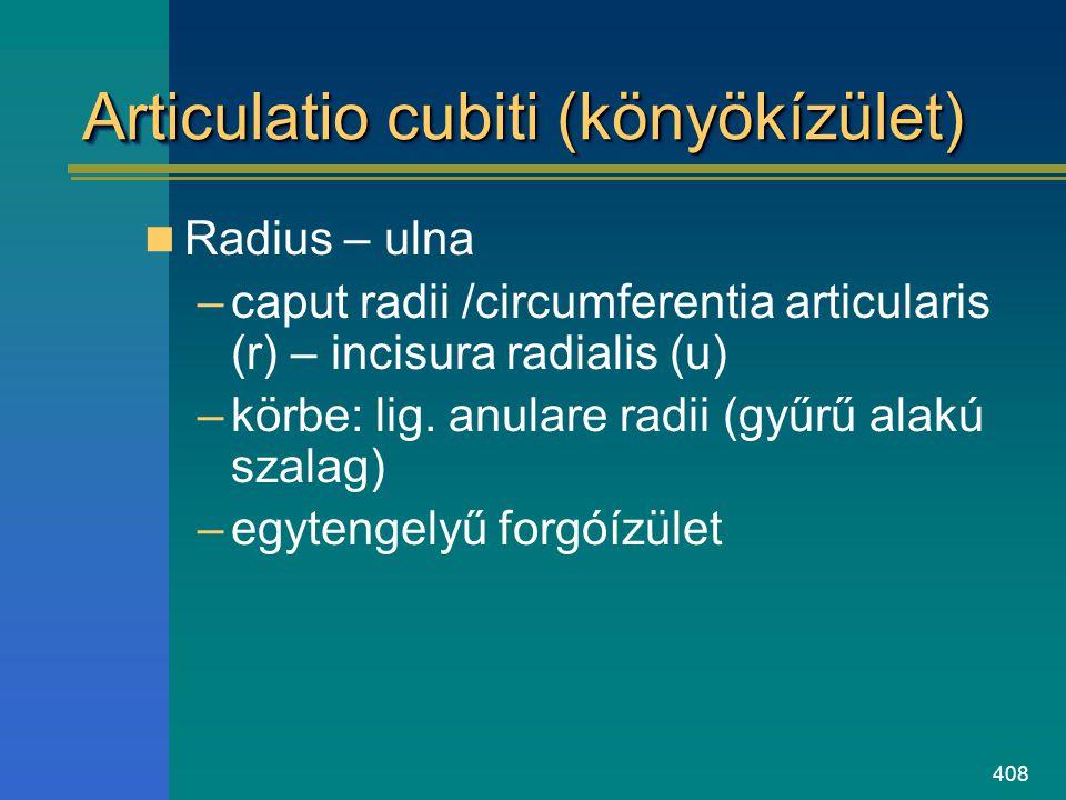 Articulatio cubiti (könyökízület)