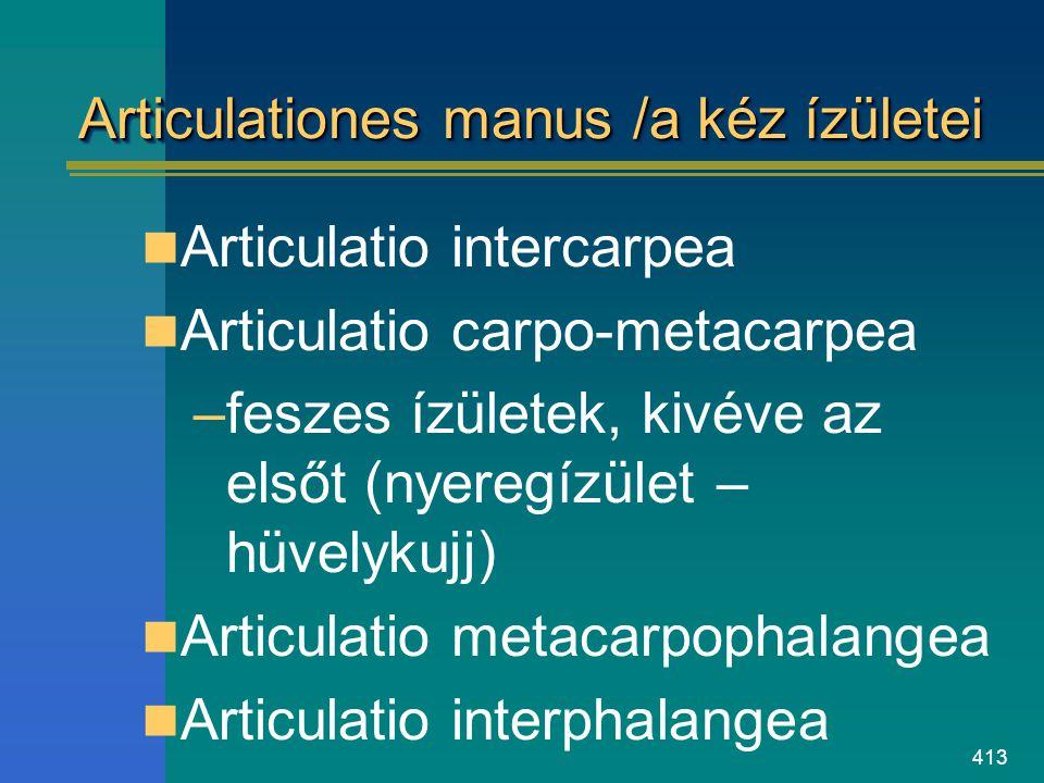 Articulationes manus /a kéz ízületei