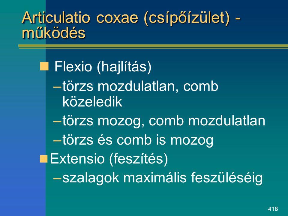 Articulatio coxae (csípőízület) - működés