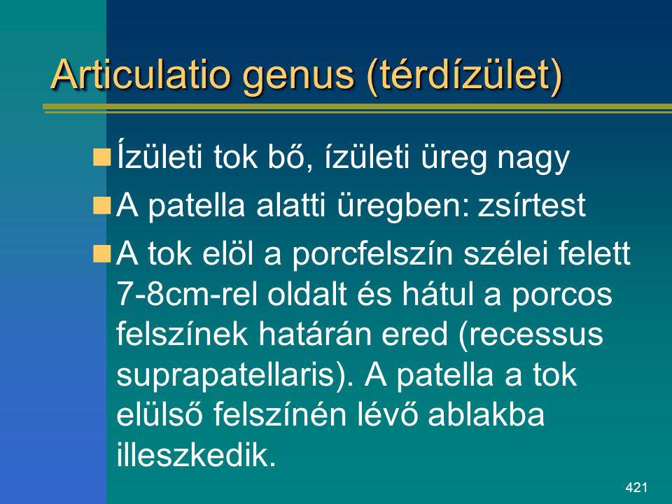 Articulatio genus (térdízület)
