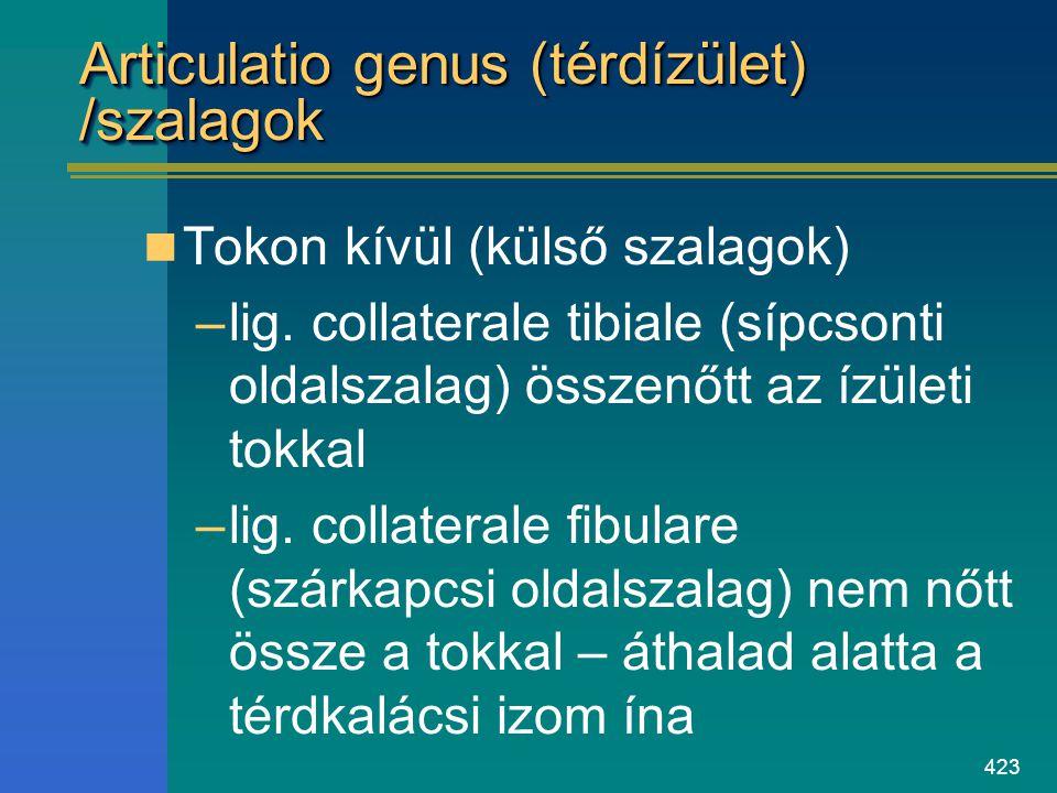 Articulatio genus (térdízület) /szalagok