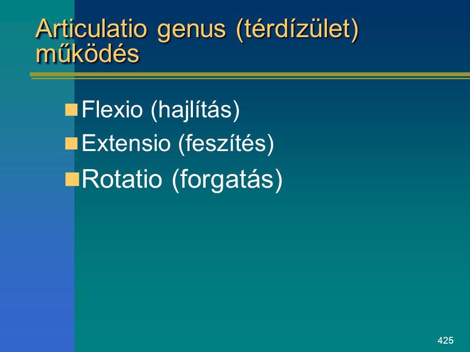 Articulatio genus (térdízület) működés