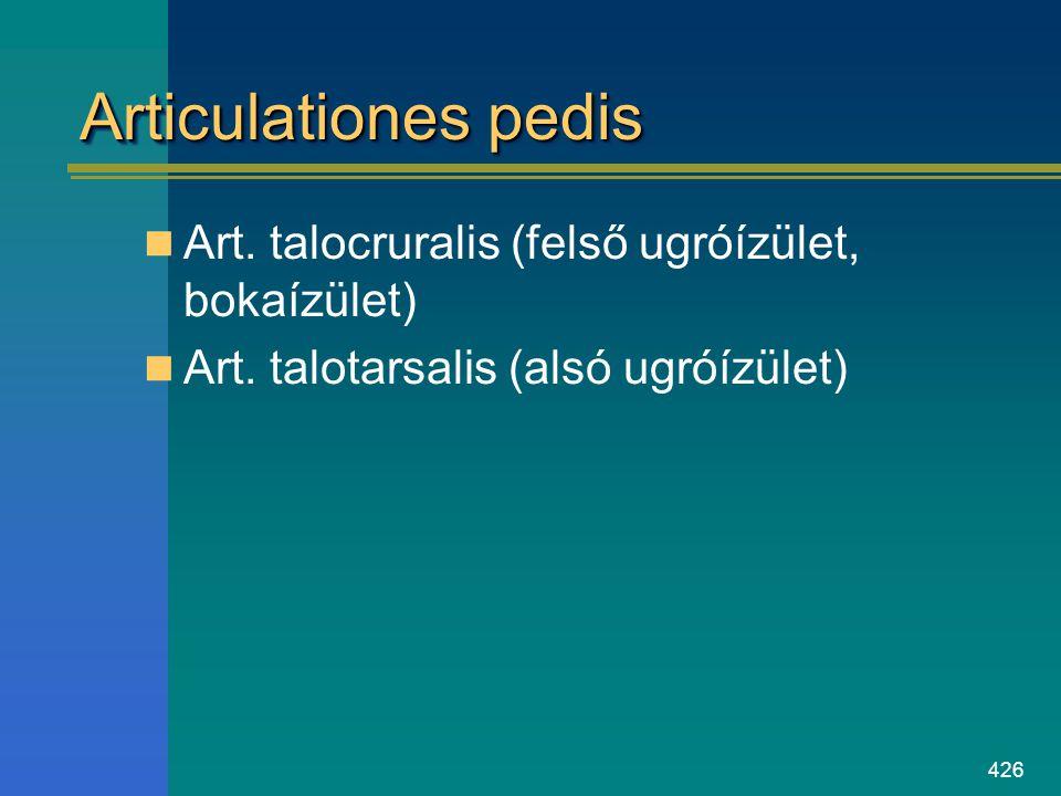 Articulationes pedis Art. talocruralis (felső ugróízület, bokaízület)