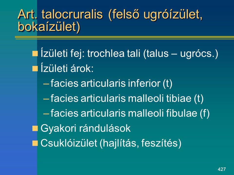 Art. talocruralis (felső ugróízület, bokaízület)