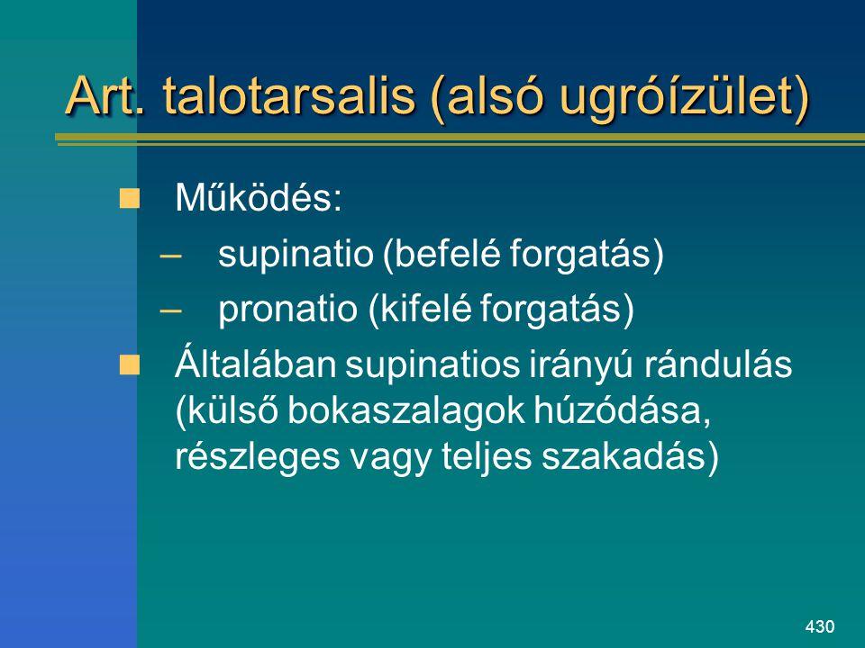 Art. talotarsalis (alsó ugróízület)