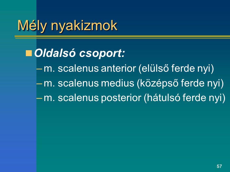 Mély nyakizmok Oldalsó csoport: