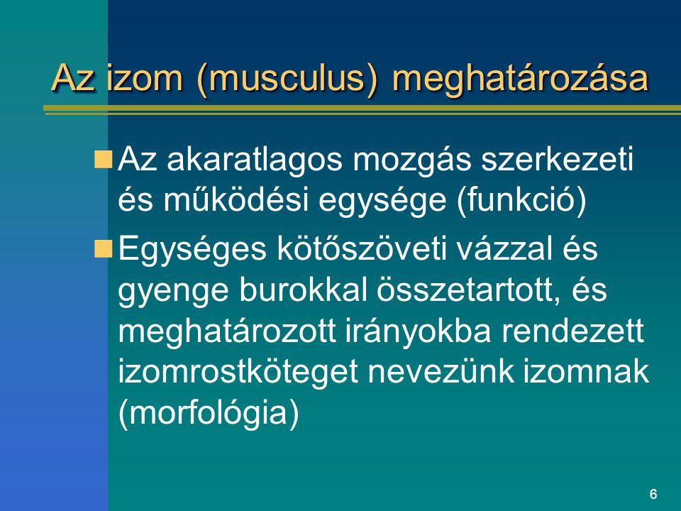 Az izom (musculus) meghatározása
