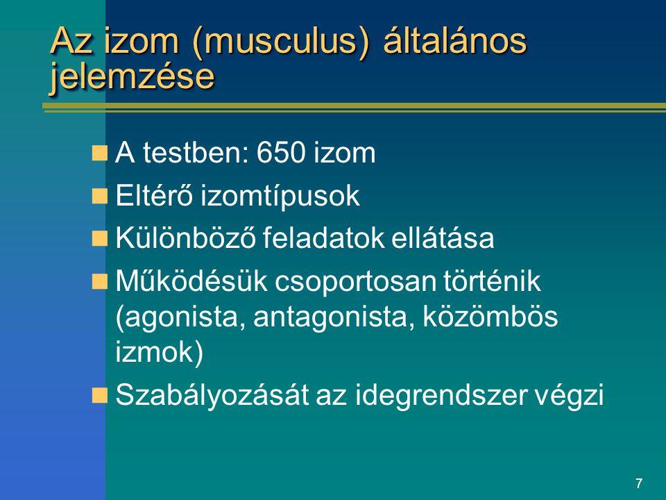 Az izom (musculus) általános jelemzése