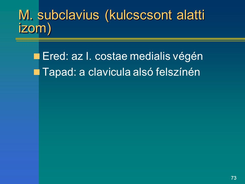 M. subclavius (kulcscsont alatti izom)