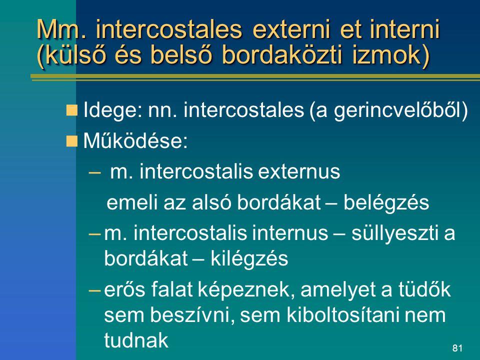 Mm. intercostales externi et interni (külső és belső bordaközti izmok)