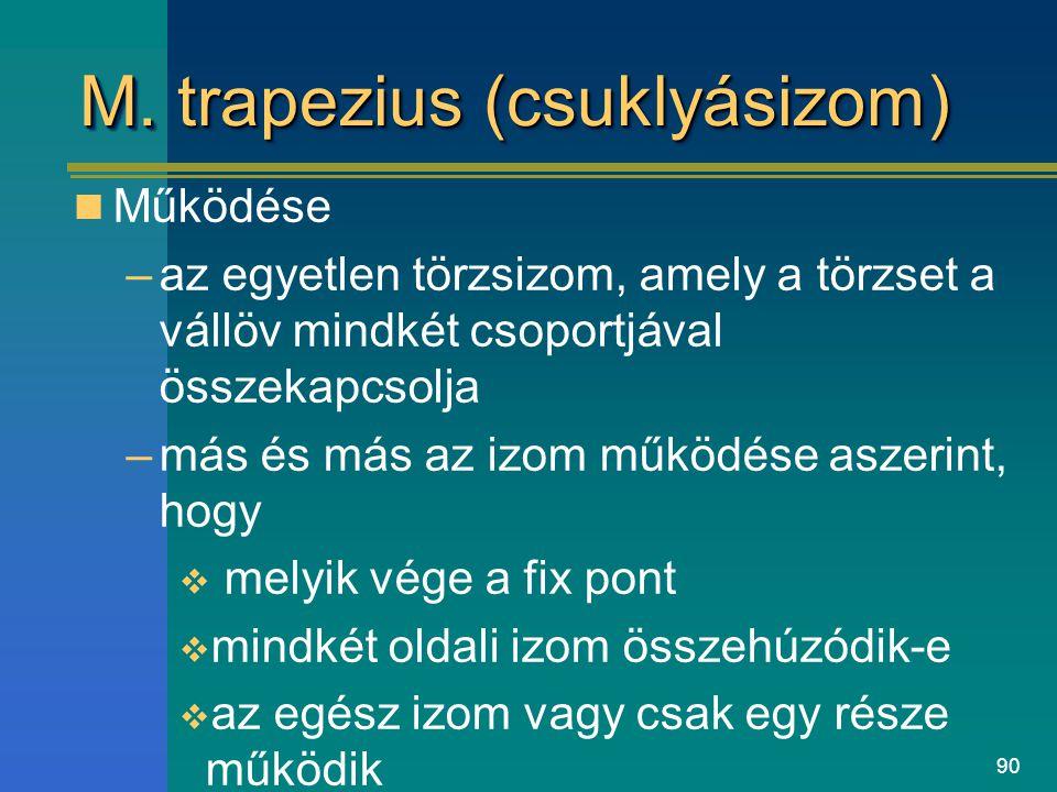M. trapezius (csuklyásizom)