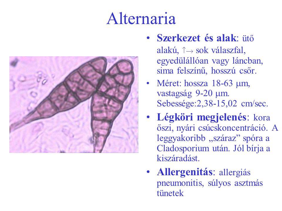 Alternaria Szerkezet és alak: ütő alakú,  sok válaszfal, egyedülállóan vagy láncban, sima felszínű, hosszú csőr.