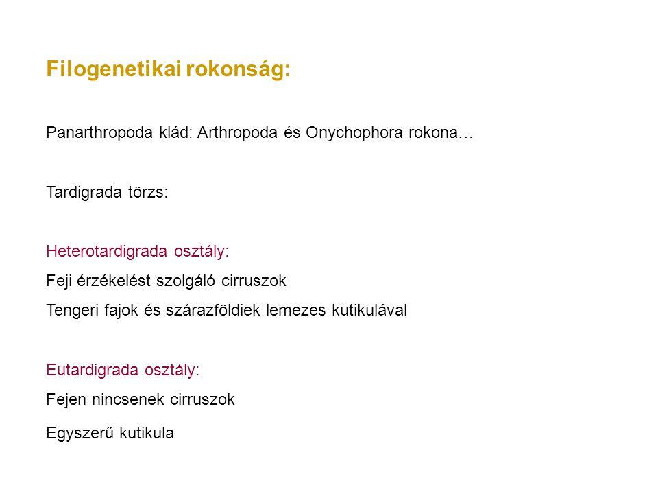 Filogenetikai rokonság: