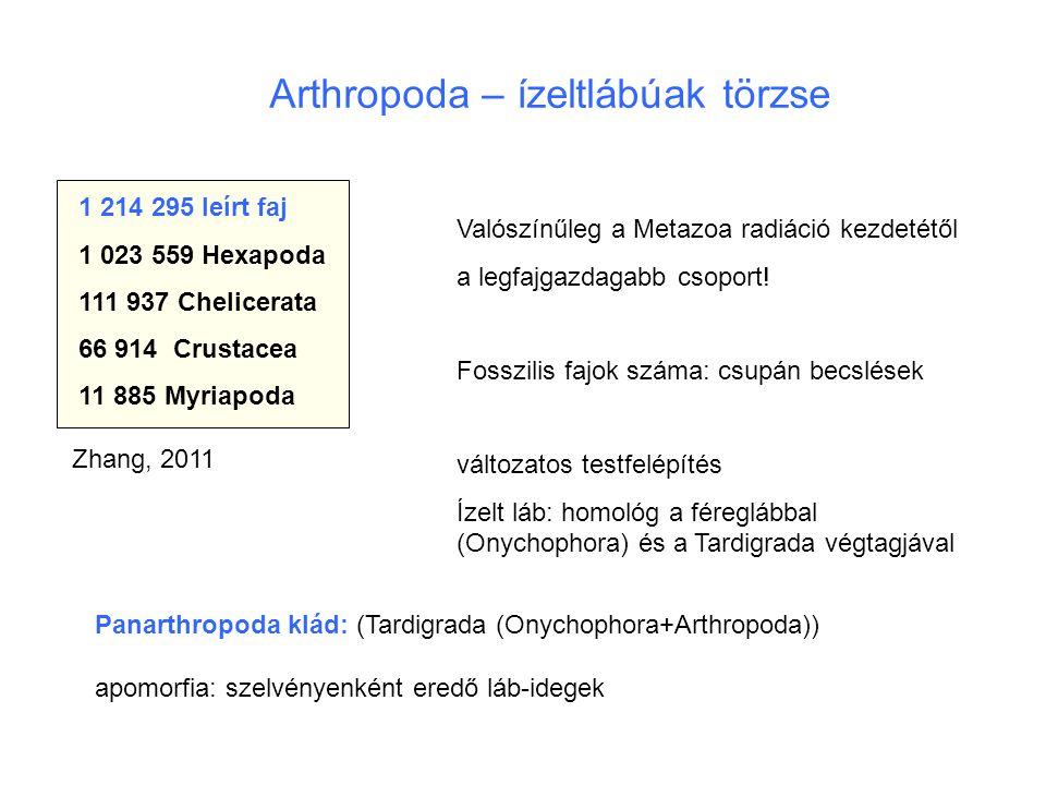 Arthropoda – ízeltlábúak törzse