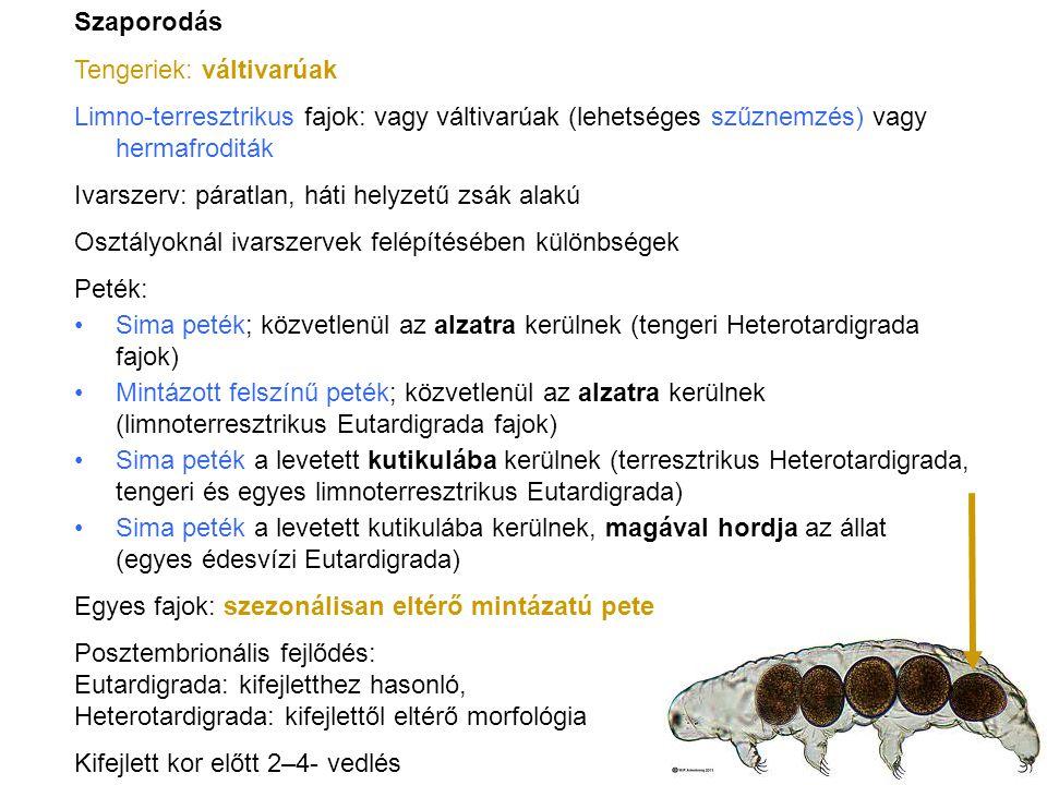 Szaporodás Tengeriek: váltivarúak. Limno-terresztrikus fajok: vagy váltivarúak (lehetséges szűznemzés) vagy hermafroditák.