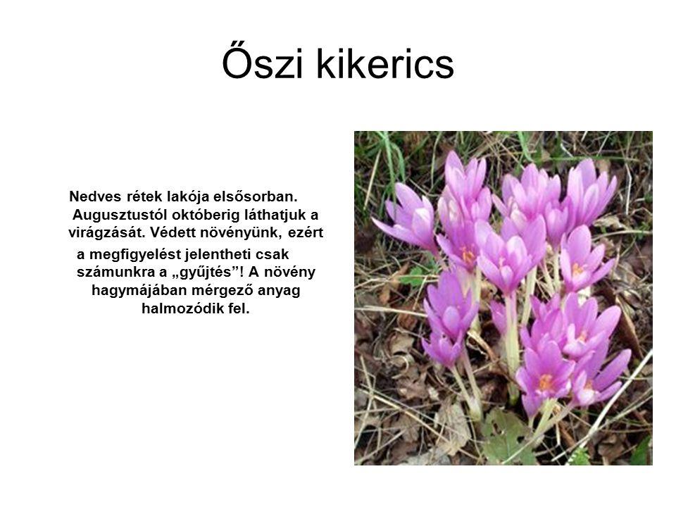 Őszi kikerics Nedves rétek lakója elsősorban. Augusztustól októberig láthatjuk a virágzását. Védett növényünk, ezért.