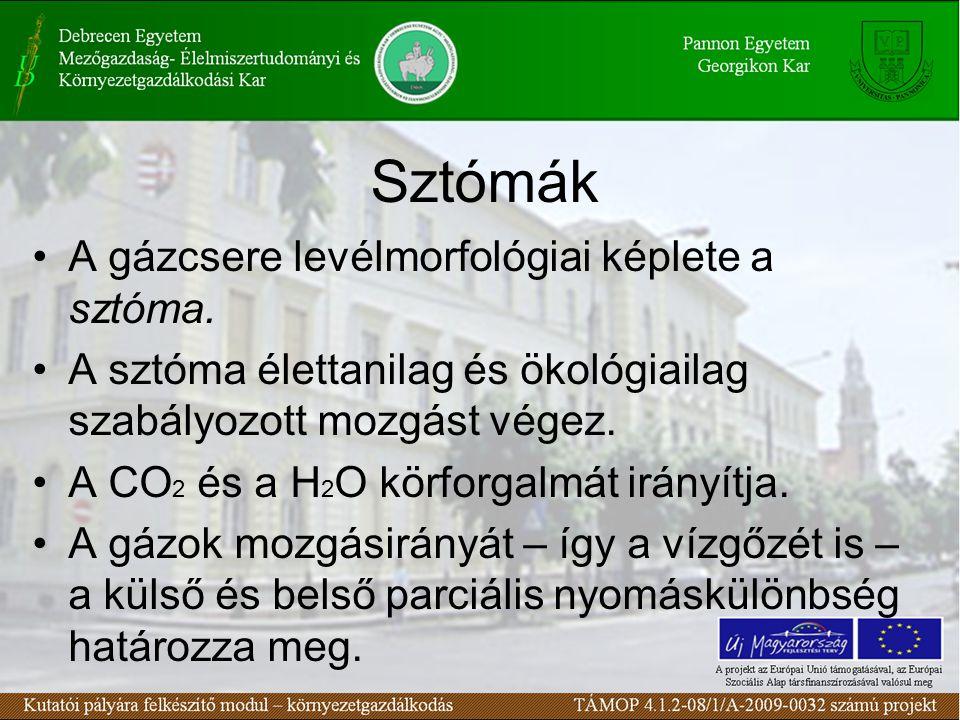 Sztómák A gázcsere levélmorfológiai képlete a sztóma.
