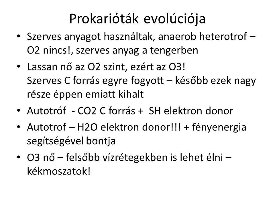 Prokarióták evolúciója