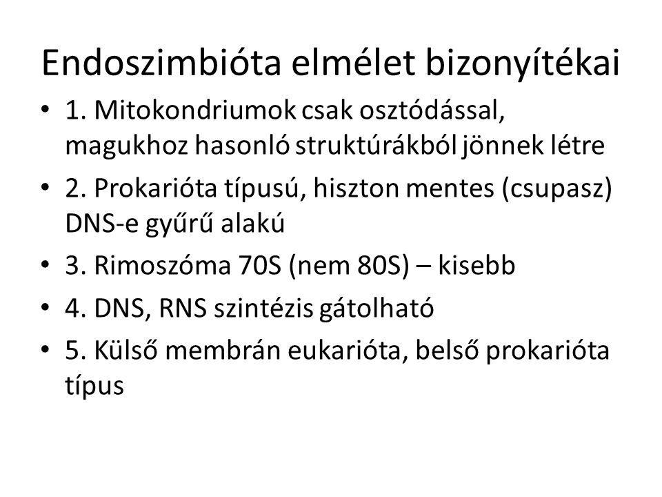 Endoszimbióta elmélet bizonyítékai