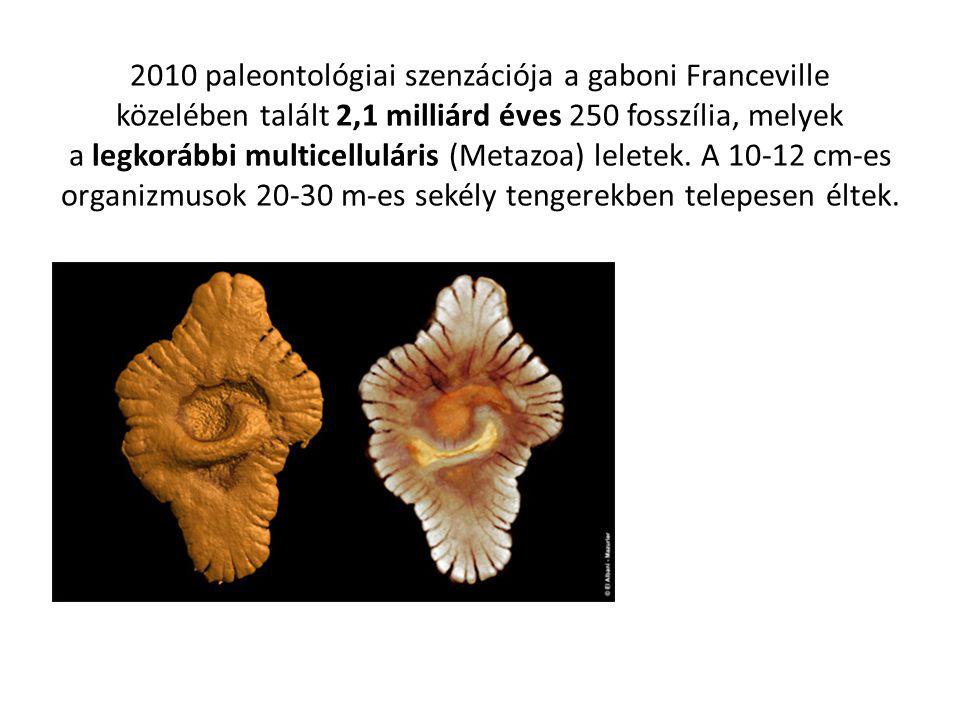 2010 paleontológiai szenzációja a gaboni Franceville közelében talált 2,1 milliárd éves 250 fosszília, melyek a legkorábbi multicelluláris (Metazoa) leletek.