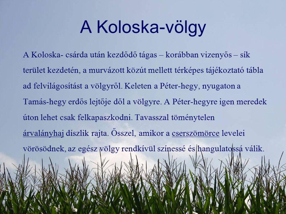 A Koloska-völgy