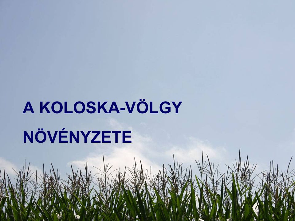 A Koloska-völgy növényzete