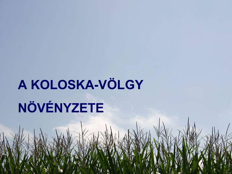 A Koloska-völgy növényzete
